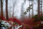 Bloodred Path by Aenea-Jones