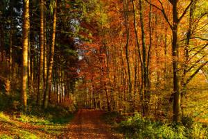Autumn remembrance X by Aenea-Jones