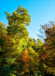 Autumn Foliage by Aenea-Jones