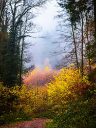 Last Breath of Autumn IV by Aenea-Jones