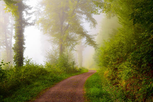 Foggy Morning XIX by Aenea-Jones