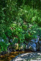 Green Oasis by Aenea-Jones