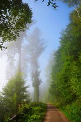 Foggy Morning XX by Aenea-Jones