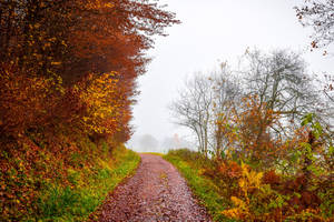 Last Breath of Autumn VI by Aenea-Jones