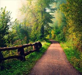 Foggy Morning X v2.0 by Aenea-Jones