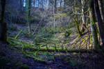 Cursed Woods by Aenea-Jones