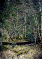 Cursed Woods II by Aenea-Jones