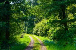 The World is Green XVI by Aenea-Jones