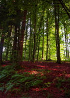 Deep in the Woods IX by Aenea-Jones