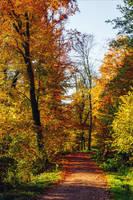 Autumn remembrance XII by Aenea-Jones