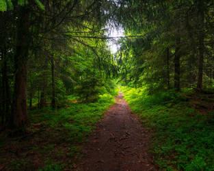 The Old Woods by Aenea-Jones