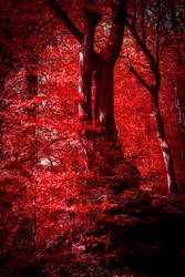 Bloodred Forest XV by Aenea-Jones