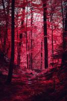 Bloodred Forest XVI by Aenea-Jones