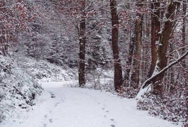 Winter has come V by Aenea-Jones