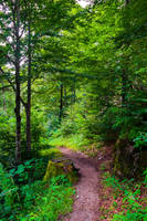Country Trail IX by Aenea-Jones
