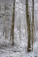 Winter Trees II by Aenea-Jones
