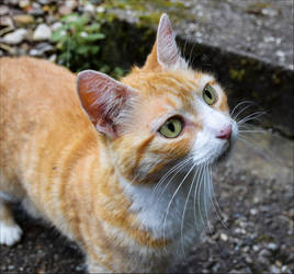 Kitty by Aenea-Jones