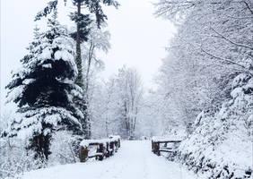 Last Winter by Aenea-Jones