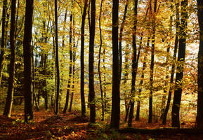 Autumn Magic IV by Aenea-Jones