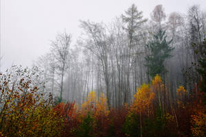 Last Breath of Autumn X v2.0 by Aenea-Jones