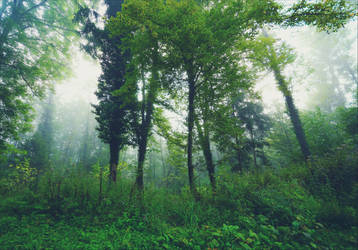Foggy Morning XXVI v2.0 by Aenea-Jones
