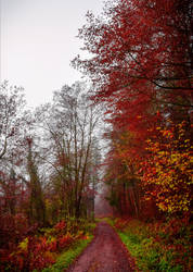Through the Red Trees by Aenea-Jones