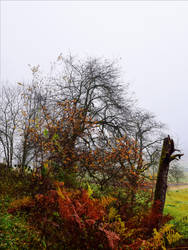 Last Breath of Autumn XVI by Aenea-Jones
