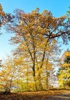 Autumn Tree by Aenea-Jones