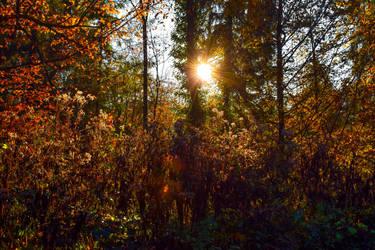 Autumn Sun by Aenea-Jones