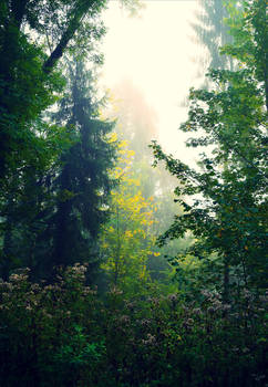 Foggy Morning XXVIII v2.0 by Aenea-Jones