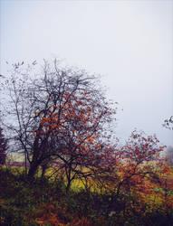 Last Breath of Autumn XVII by Aenea-Jones