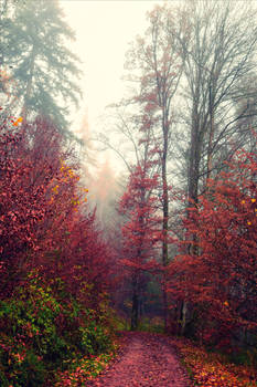 Bloodred Forest XIX v2.0 by Aenea-Jones