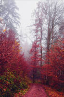 Bloodred Forest XIX v3.0 by Aenea-Jones
