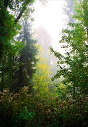Foggy Morning XXVIII v4.0 by Aenea-Jones