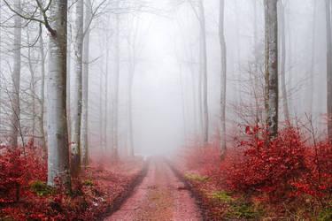 Bloodred Forest XX by Aenea-Jones