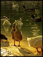 :Ducks pt. III: - Difference by demisone