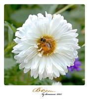 Beee... by demisone