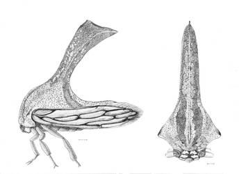 Treehopper study by Edestoid