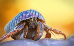 Hermit crab study by Edestoid