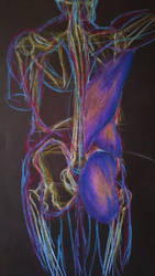 Male Anatomy by doragonbat