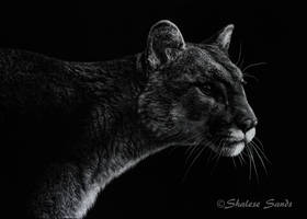 Sleek Shadows by ShaleseSands
