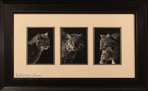 Feline Finesse - Framed by ShaleseSands