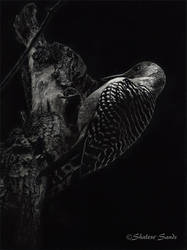 Caught in the Light - Scratchboard by ShaleseSands