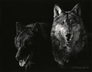 Living Shadows - Scratchboard by ShaleseSands
