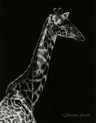 Simple Elegance - Scratchboard by ShaleseSands