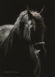 A Light in the Dark - Scratchboard by ShaleseSands