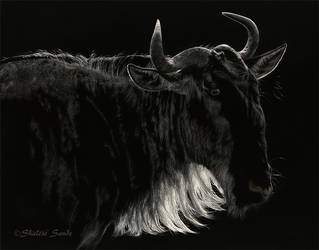 Sun-kissed - Scratchboard by ShaleseSands