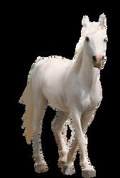 Horse-pre-cut2 by Sasha8702
