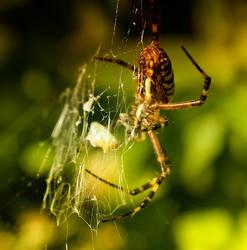 Spider_007 by Kemen1777