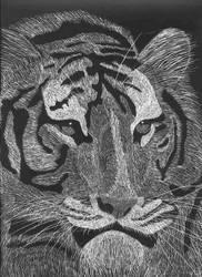 Sumatran Tiger by Leo9